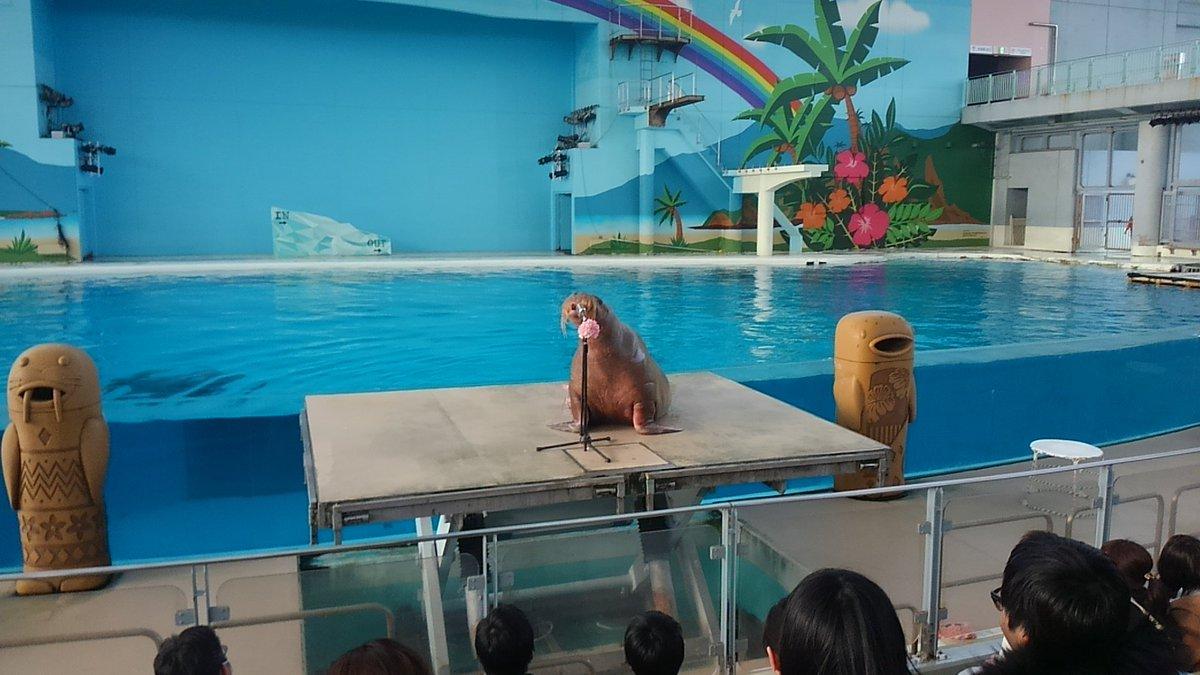 八景島行ってきました✨大原櫻子さんのトークライブを見て、その流れで海の動物ショーを見てきた✨櫻子さんとシロイルカの共演が
