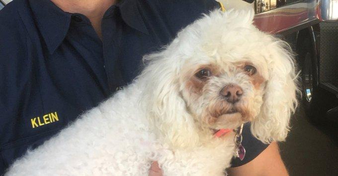 Bombeiro faz respiração boca a boca para salvar cão após incêndio nos EUA 🐶❤️ https://t.co/uUDqW7zjFA #G1