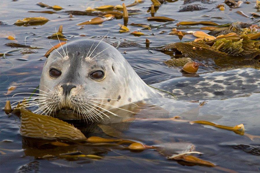 Llega a Madrid la expo 'Océanos', con imágenes del fondo oceánico, réplicas de animales marinos... @OceansExhibit https://t.co/RxcPzZUeba