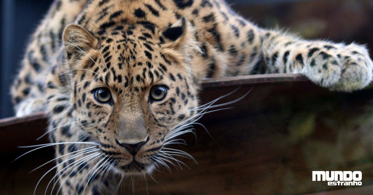 Os 10 animais com maior risco de extinção: https://t.co/QdoucDemDb