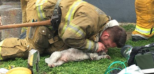 Cão sofre parada respiratória após incêndio e é reanimado por bombeiros https://t.co/FtFVTxhlRG