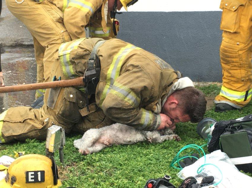 Dem beherzten Einsatz dieses Feuerwehrmanns hat der Mischlingshund Nalu Marley sein Leben zu verdanken. https://t.co/J24DM8f2ts