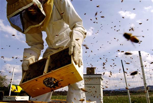 Scientists have some wild ideas for solving our big bee problem. https://t.co/tIC2Ge9G9c