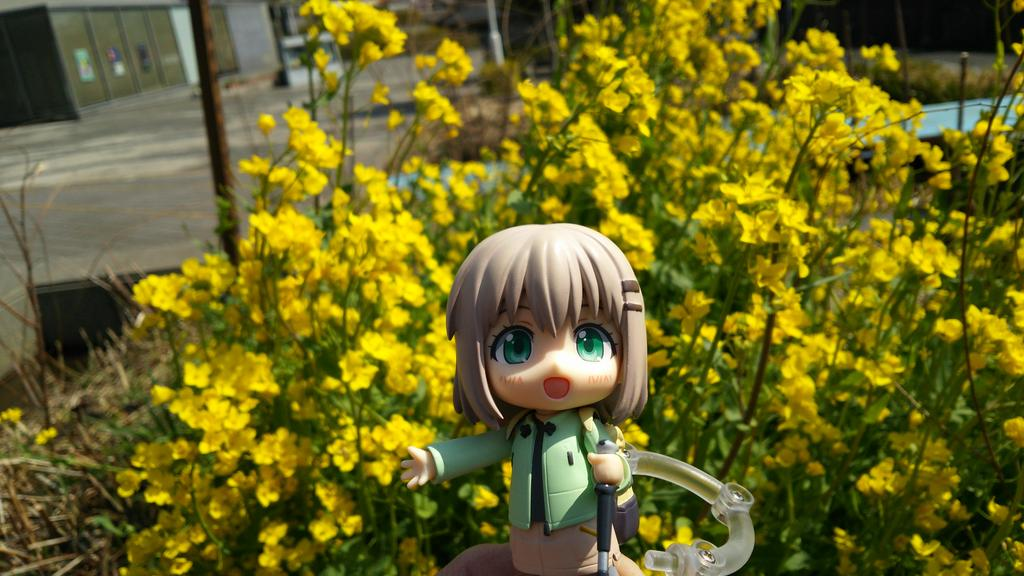 いつもの東大和郷土博物館へ。新しいプラネタリウムのプログラムが始まりました。菜の花も咲いて、ヒキガエルも卵を産み始めまし