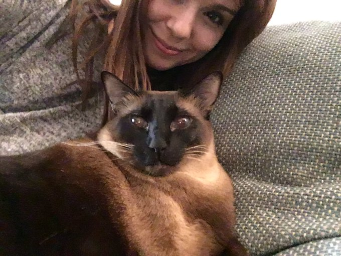 Loving the fat Siamese cat at my friend's place lol! She's adorable. https://t.co/eBU3yUbDF3
