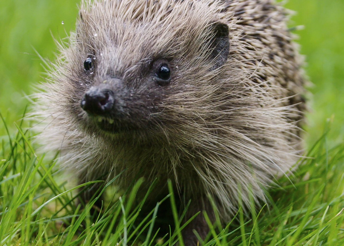 So happy to be filming hedgehogs with the brilliant @SteveBackshall for @athenafilms - @channel5_tv - Bri https://t.co/Rq6FmOa4gx