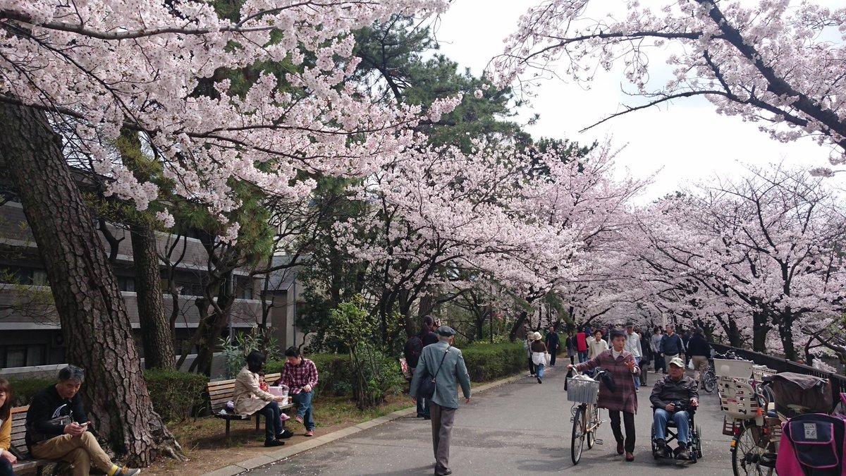 「長門有希ちゃんの消失」、中央図書館前のベンチ。この辺りは壮大な桜に囲まれていますw #haruhi #涼宮ハルヒの憂鬱