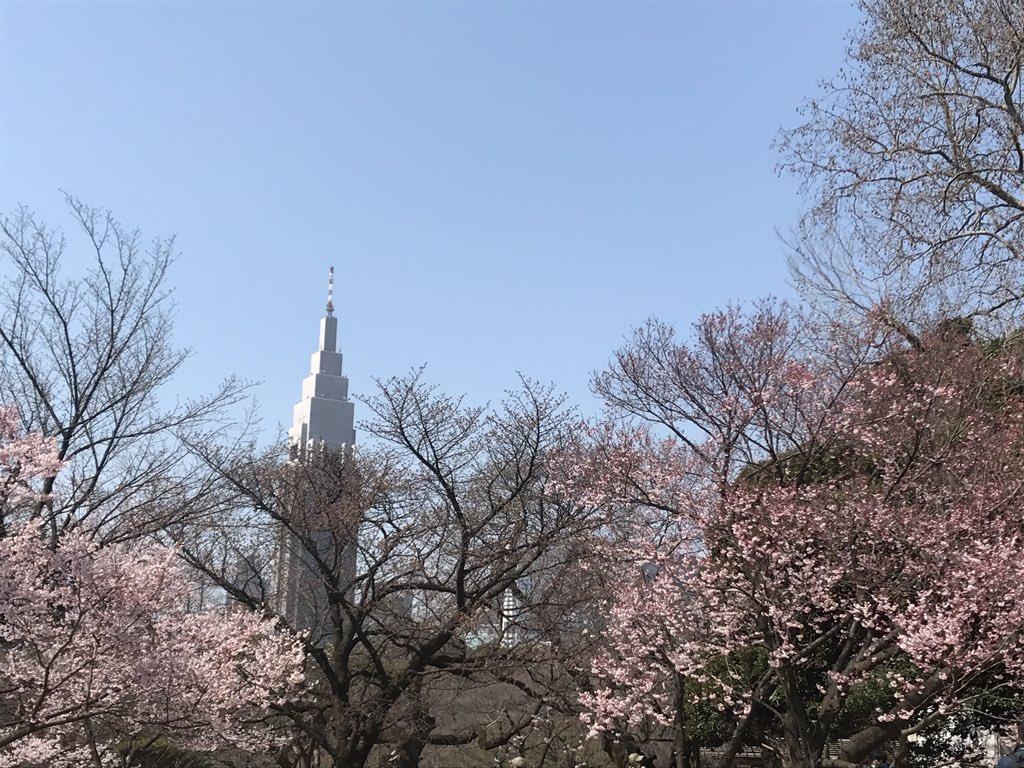 言の葉の庭の聖地で桜見てきた🌸
