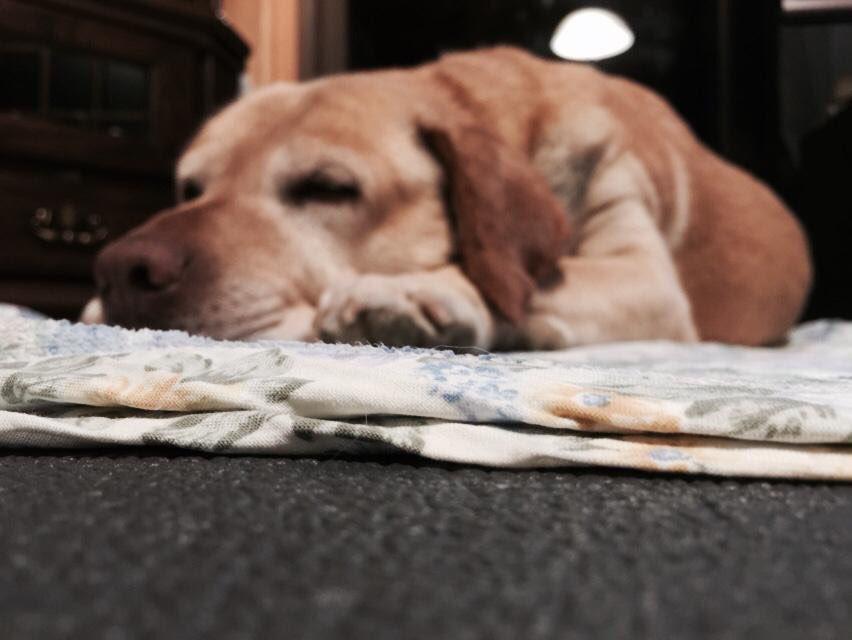 コンバンハ(o^^o)トトロも同じく少しの段差で躓きます(^。^)愛犬を亡くしてからツイッターに時間をかけ過ぎ散歩せ