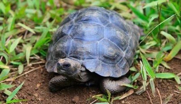 Investigan mortandad de tortugas en una laguna volcánica de Nicaragua