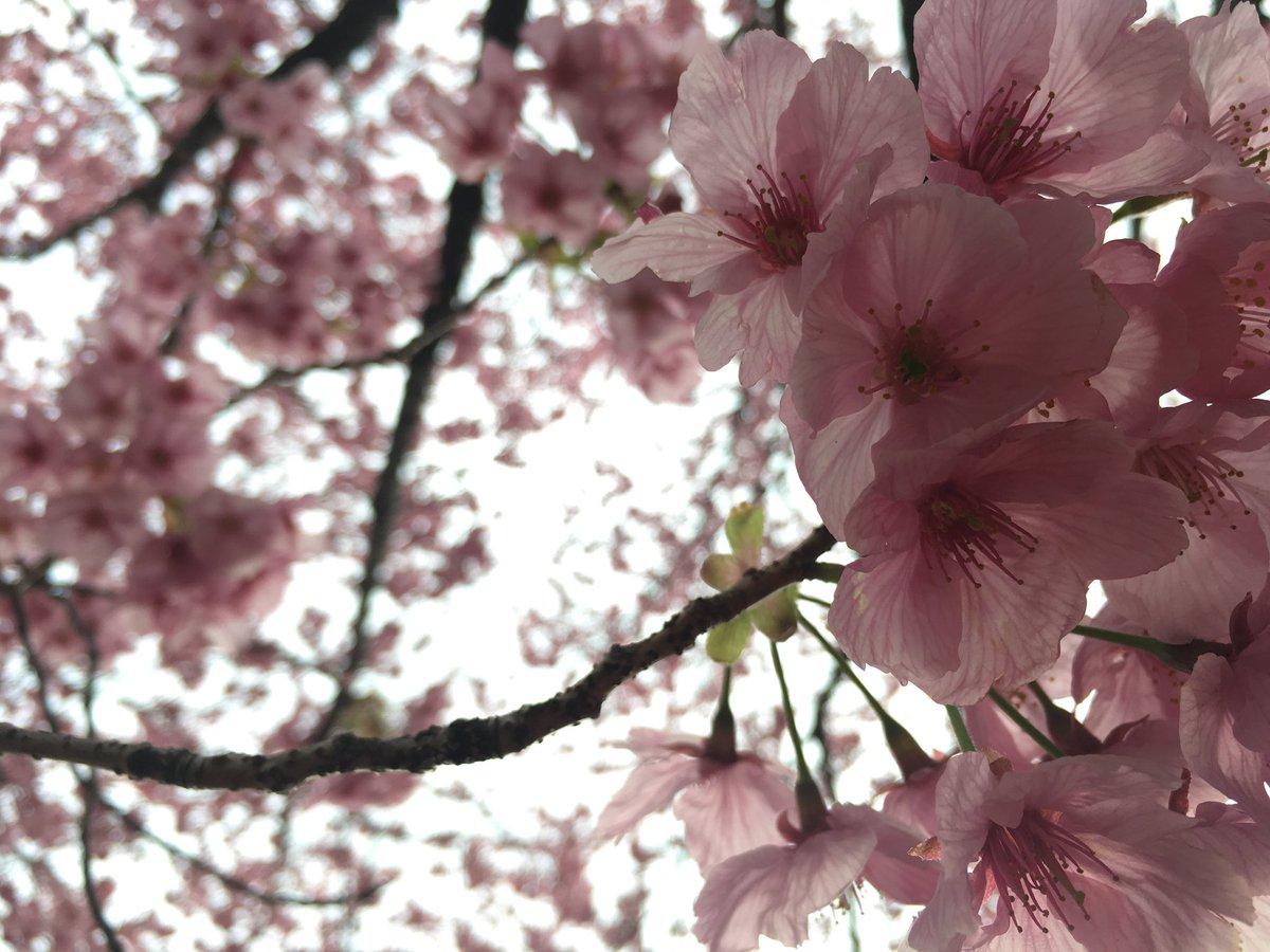まるちゃん(@_____iamm)と新宿御苑いってきた〜〜🌸言の葉の庭ごっこちゃんとしました、笑たのしすぎて、あっという