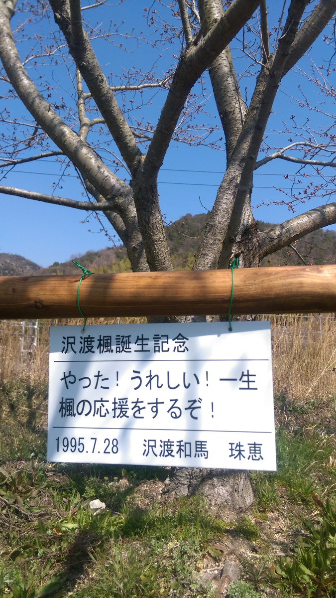 写真は前に訪ねた時のですけど、久しぶりに生で見たいですね♪(*´ω`*)桜咲いてるところは見たことないですし(^^;#た