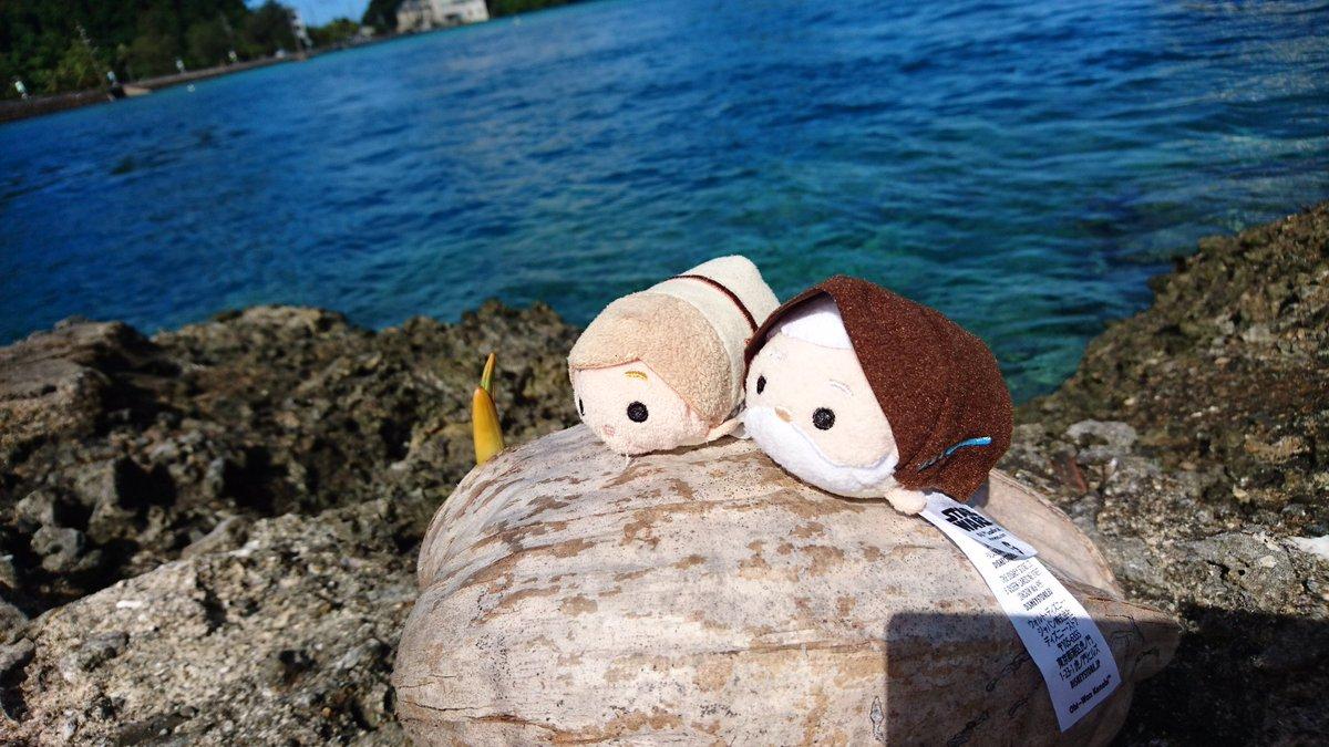 「ベン!ヤシの実が割れて芽が生えてきたよ」先日からパラオに来てます!海好きの私が世界中で最も好きな海と言える場所の一つ。