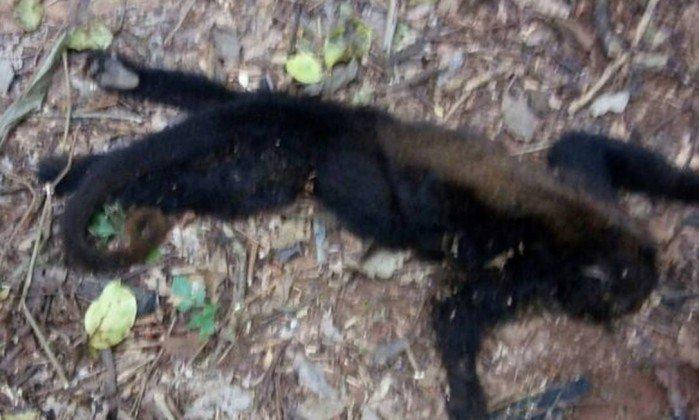 Fiocruz analisa três macacos mortos achados em Laje do Muriaé, no Rio. https://t.co/4pBTKXuF6T