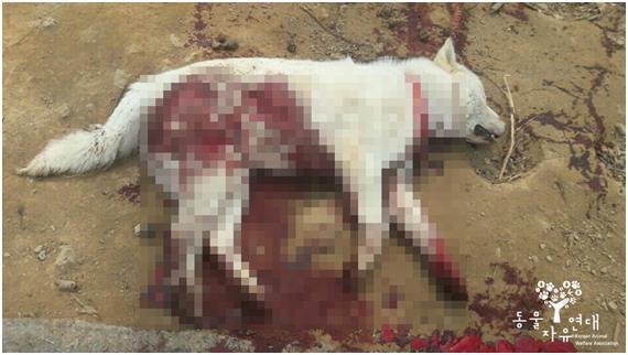 이웃과 다투다 '홧김에'  분풀이  기르던 개 5마리 흉기로 살해한 60대 남성 입건 😡  https://t.co/jqHgmqWj1q