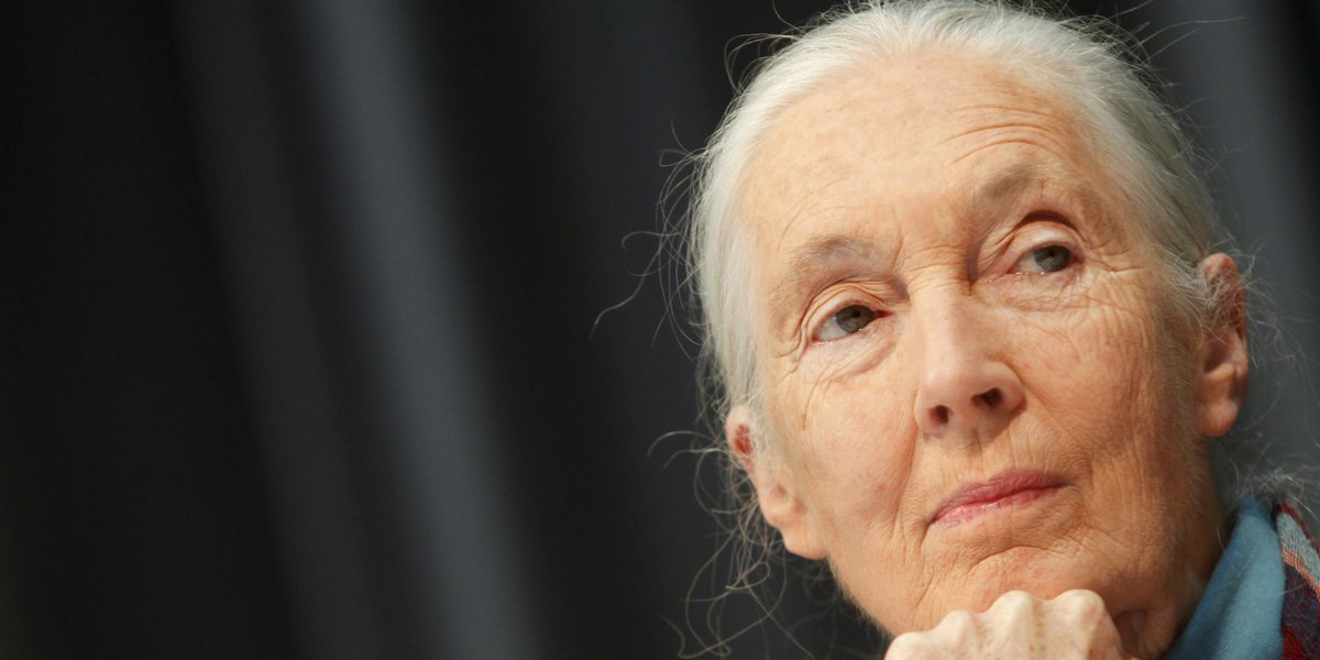 "Jane Goodall finds Trump's actions on climate ""immensely depressing"" ➡️ by @c_m_dangelo"