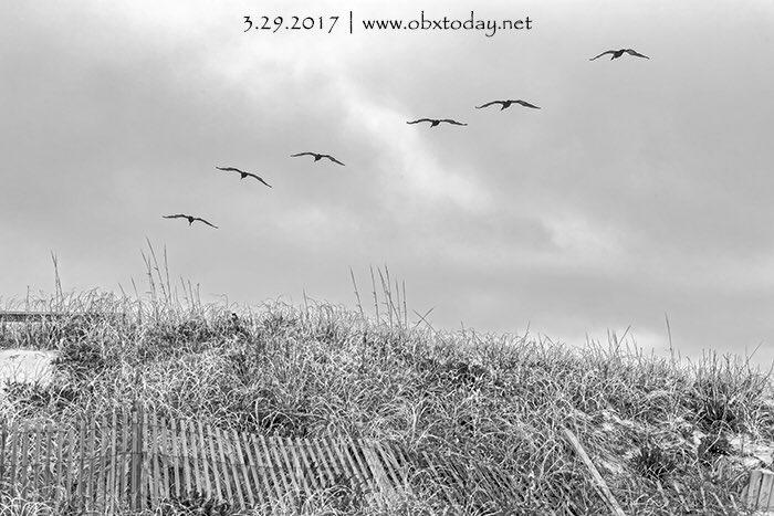RT @OBXPhotos: 3.29.2017 #obx #outerbanks #obxphotos #obxtoday #northcarolina #travel  ...