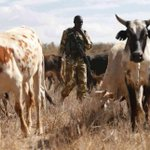 Shooting cows in Laikipia is anything but smart policing