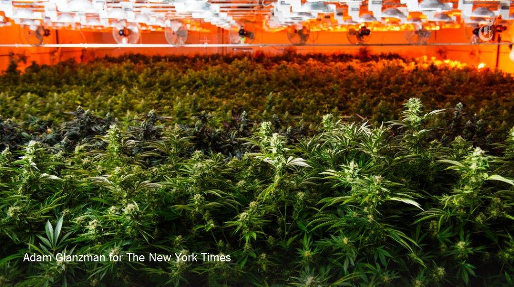 Legalized marijuana is upending the real estate market