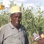 A group of Garissa pastoralists turn to agriculture to curb starvation