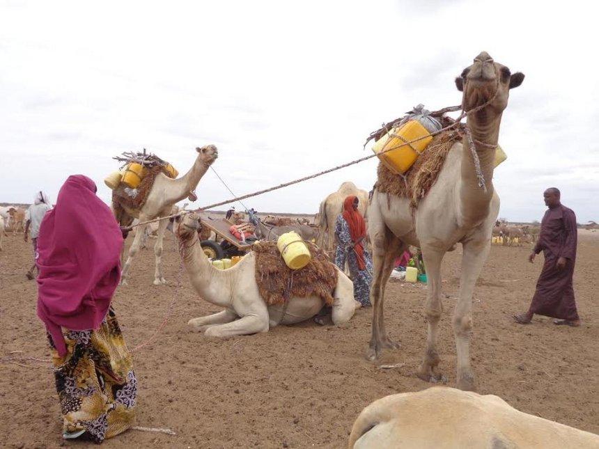 FAO gives animal feed to Wajir residents