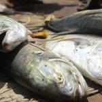 Moroccans eye TZ fishing industry