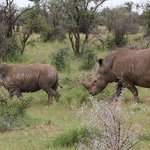 South Africa's top court lifts ban on domestic sales of rhino horn: What does that mean for conservation?