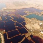 Environment watchdog urges clean-up of sewage pits