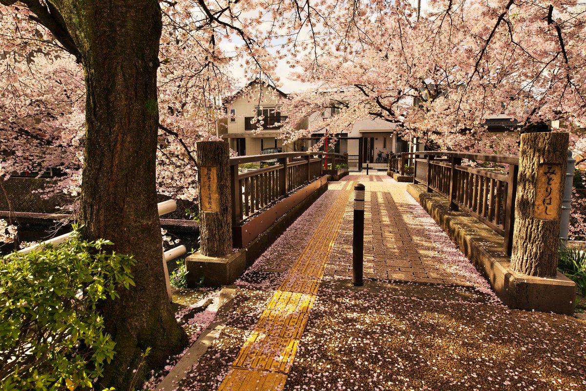 美登鯉橋反対側桜が散りはじめてましたが、これはこれでいい雰囲気ですねBlu-rayが発売されたら、また撮りに行きます#聲