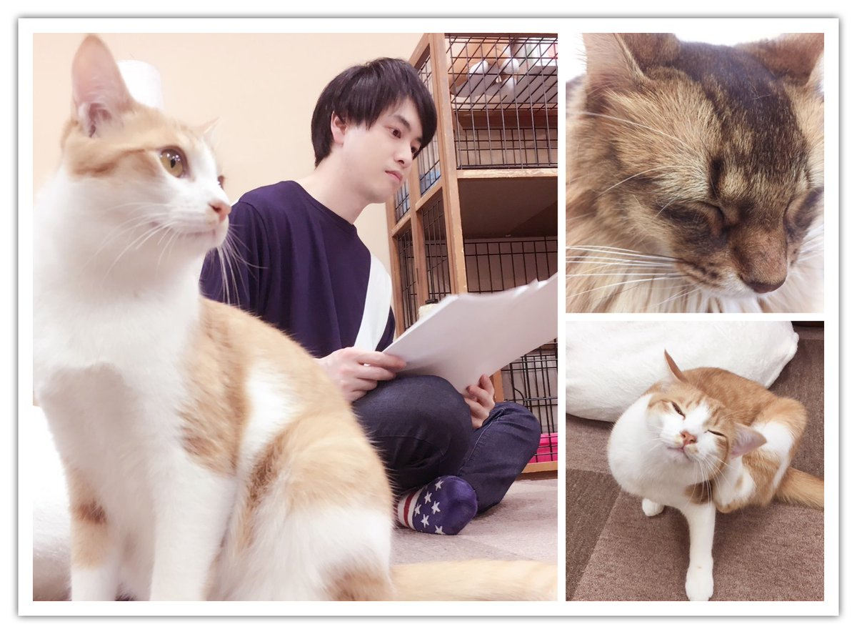 昨夜のニコ生「ねころび男子×ALL OUT‼︎コラボ」の配信をご視聴いただきました皆様、どうもありがとうございました!「