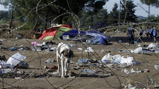 Hundreds protest stray dog poisonings in Macedonia
