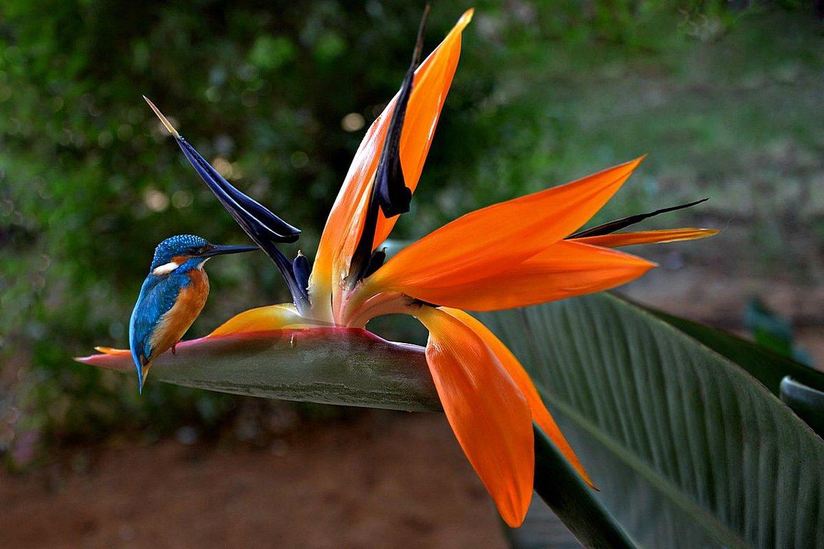 Цветок птица