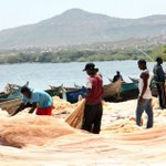 Water hyacinth menace in Lake Victoria deprives Kenyan fishermen off livelihoods