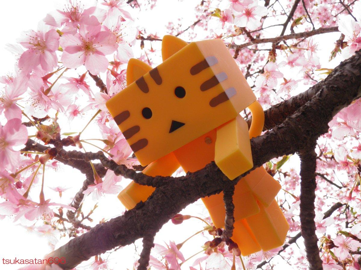 #ニャンボー #にゃんぼー #outdoortoyphotography #オモ写Vol.1488~にゃんぼー@埼玉スタ