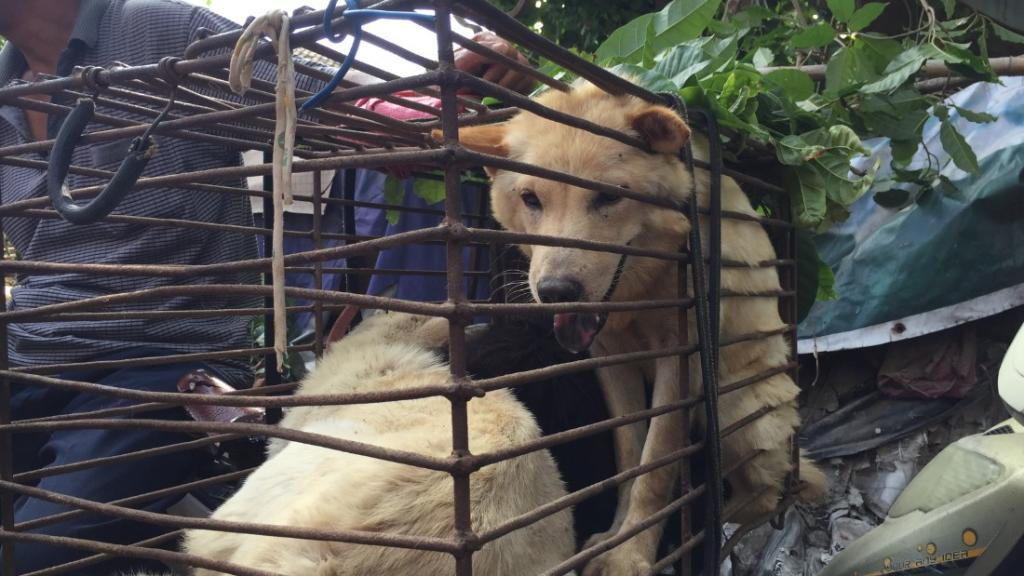 Taiwan just banned eating dog and cat meat