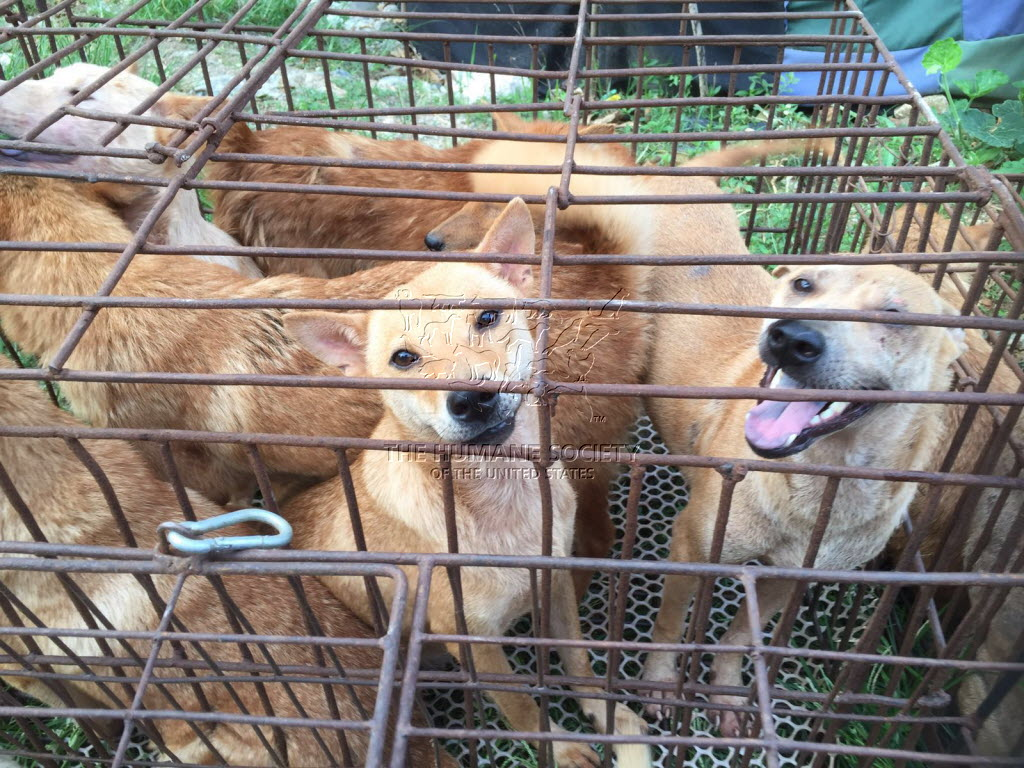 Taiwan bans human consumption of cat and dog meat