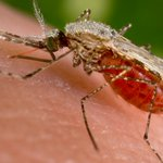 Malaria deaths in Mbeya reduced, thanks to campaign