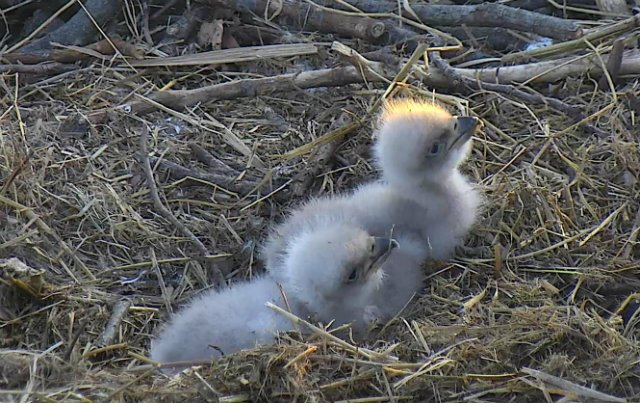 The public can suggest names for the new eaglets at the National Arboretum through April 18. https://t.co/Ctq8HO9WY5 https://t.co/XheI0XQZK8