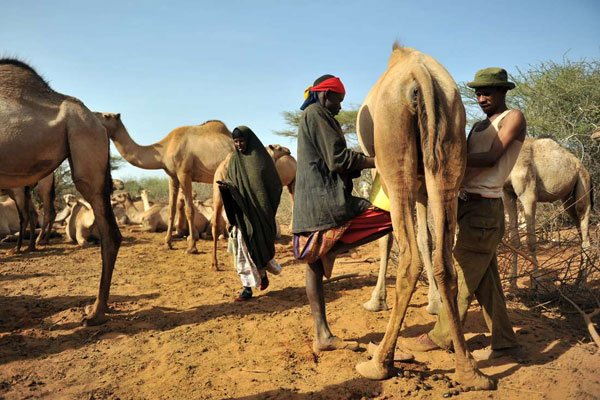 Tensions rise after discovery of murdered Marsabit teens