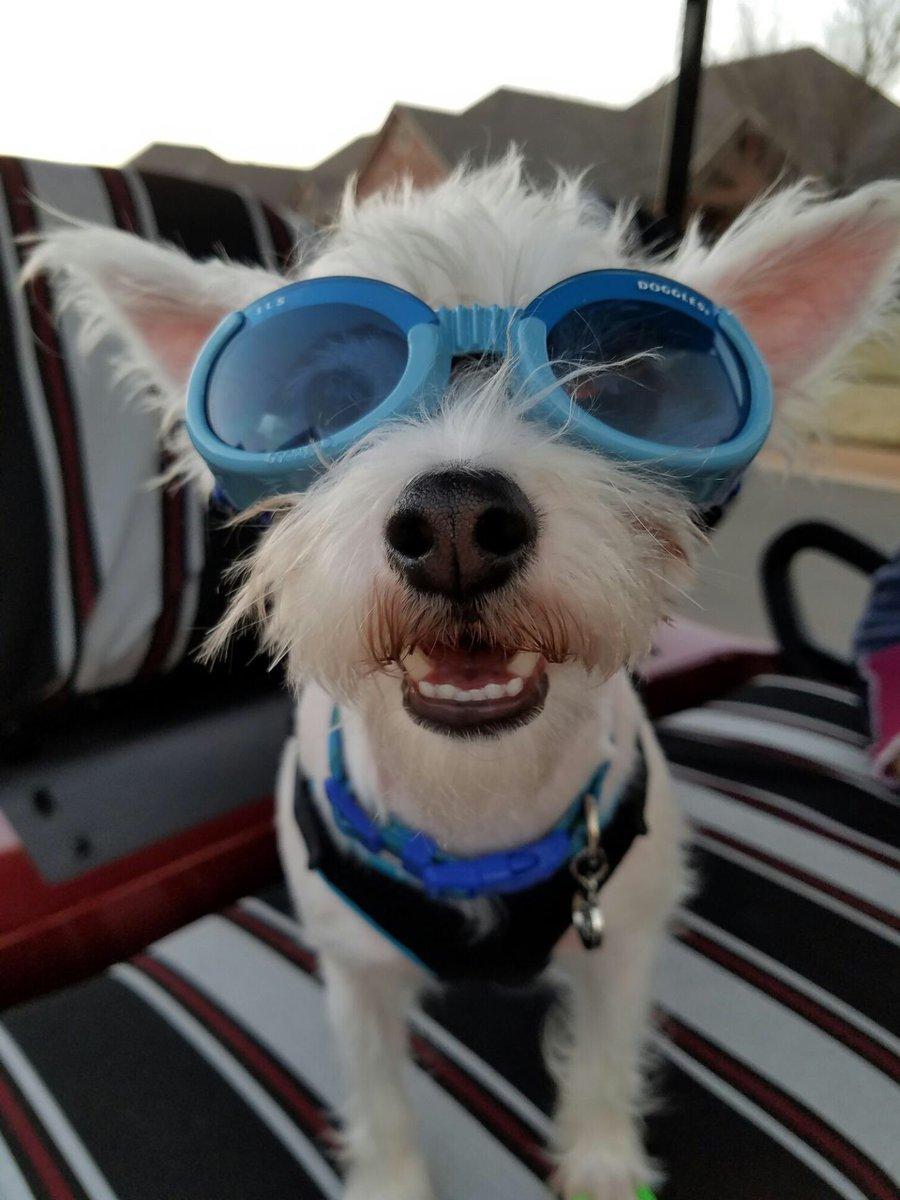 The 11 Best Animated Dogs in Movie History  slashfilmcom