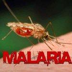 Let's INTENSIFY malaria WAR
