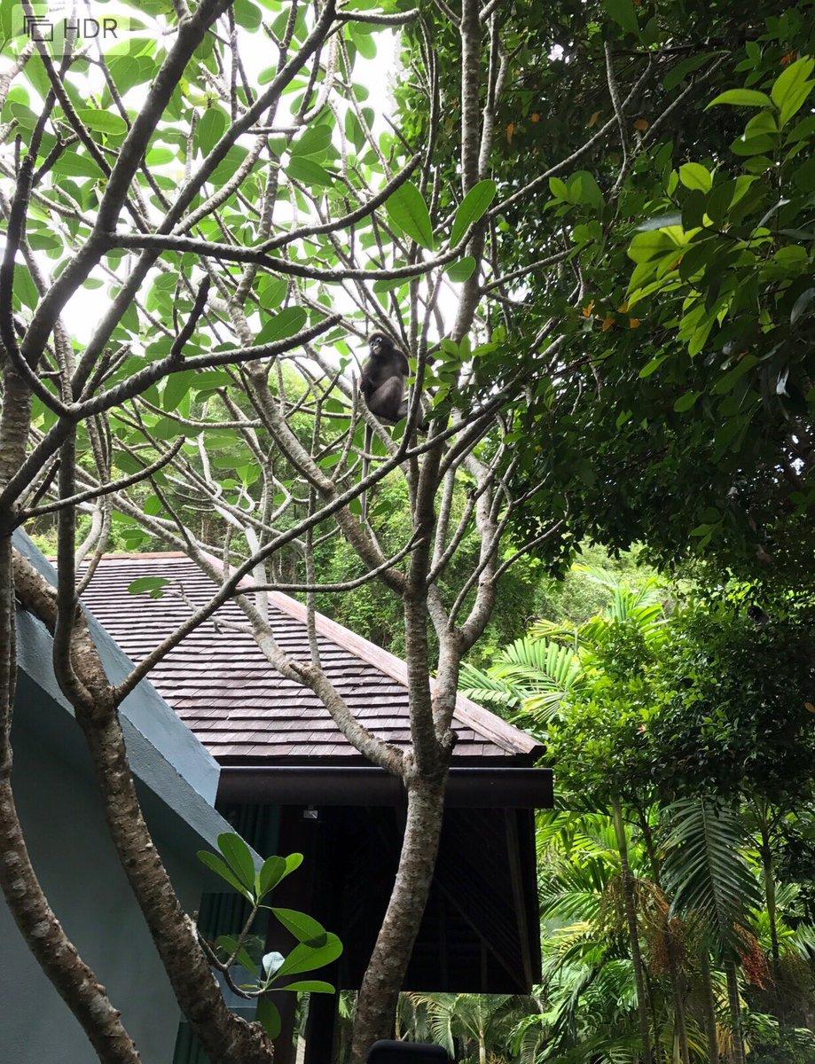撮影裏話① 撮影場所となったランカウイのフォーシーズンズホテルの敷地内に住むお猿さんは何度か紹介し...