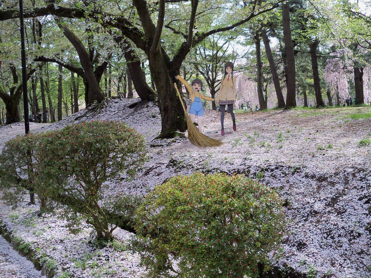 #ふらいんぐうぃっち #弘前公園弘前公園 桜の絨毯や花筏は5月連休後半頃に見られます。