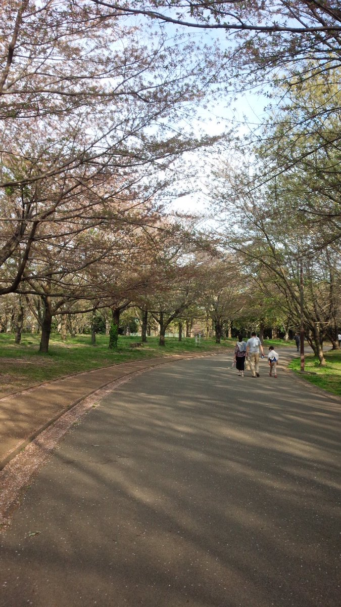 桜ちりぎみですが千葉市のコベニー峠です #MHストーリーズ