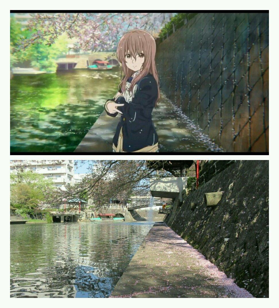 先週に引き続き、桜の大垣へ。(撮影日:2017年4月16日)将也と硝子か再開した日の翌日。作中同時季の美登鯉橋です。満開