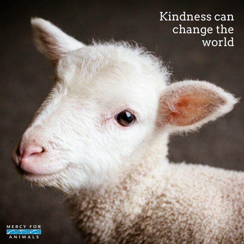 RT @MercyForAnimals: Be kind. #GoVegan https://t.co/D1qeXcTamh