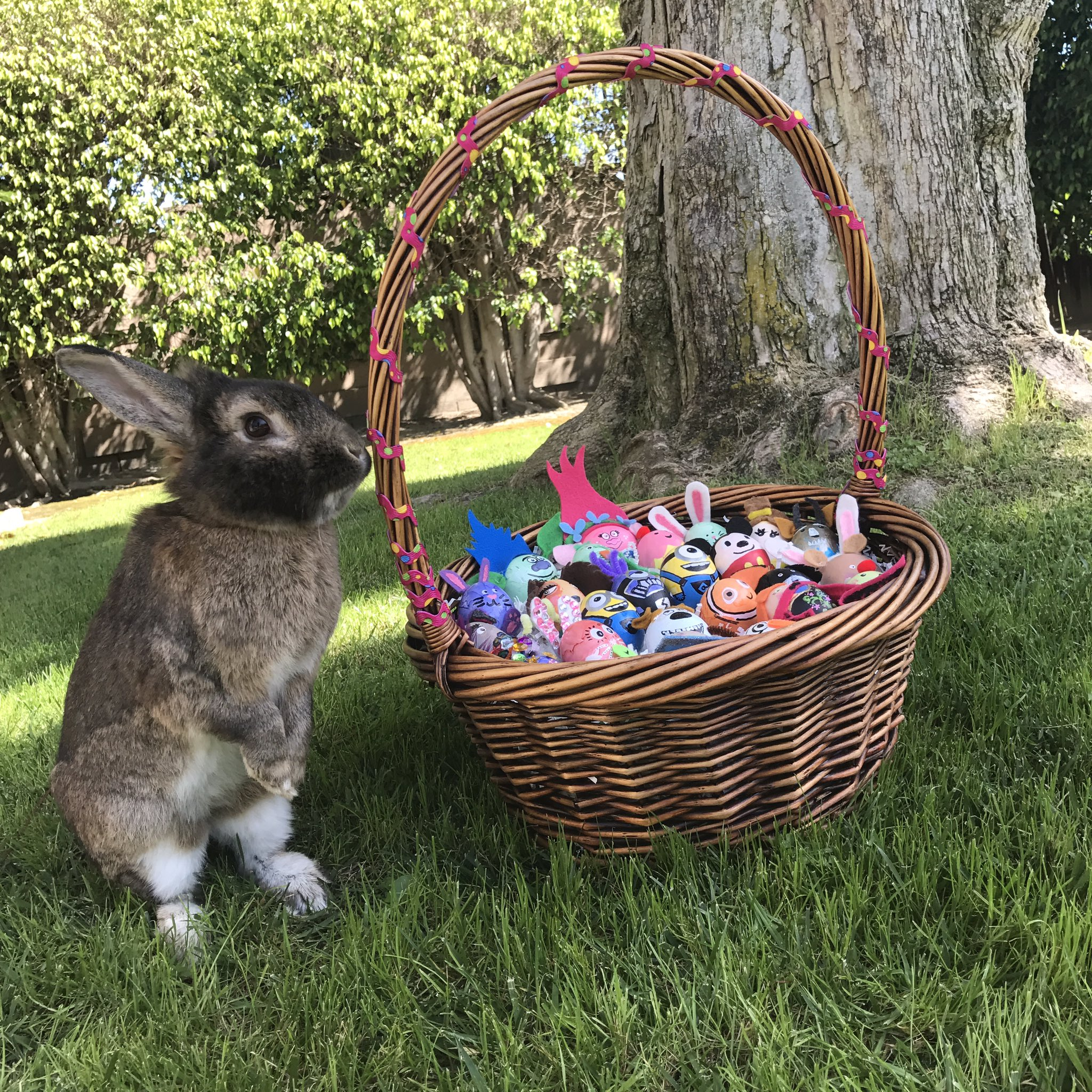 Happy Easter from my rabbit, Humphrey and me! https://t.co/xUNtNWhVIG