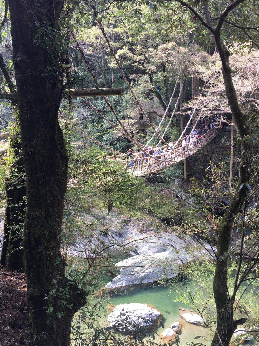 かずら橋という、蔦で編まれた有名な橋にも行ったんだけど、行く前は「蟲師の一夜橋みたいな感じかな…!(*゚▽゚*)」なんて