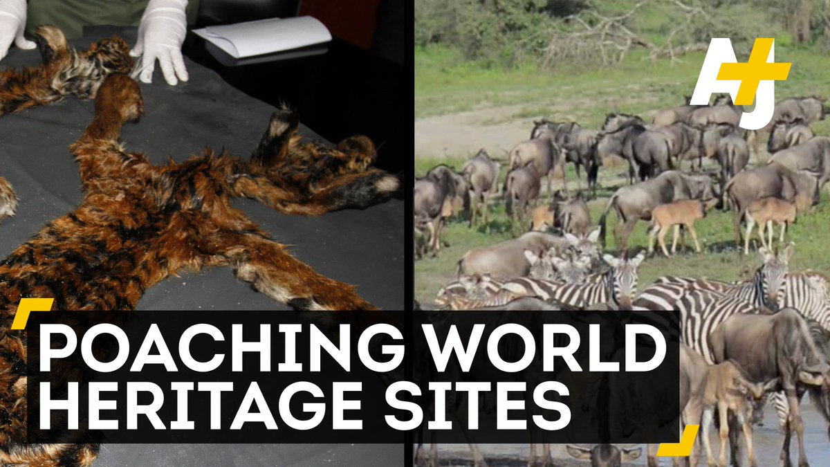 A new report says that poaching now threatens nearly half of all natural heritage sites around the world.