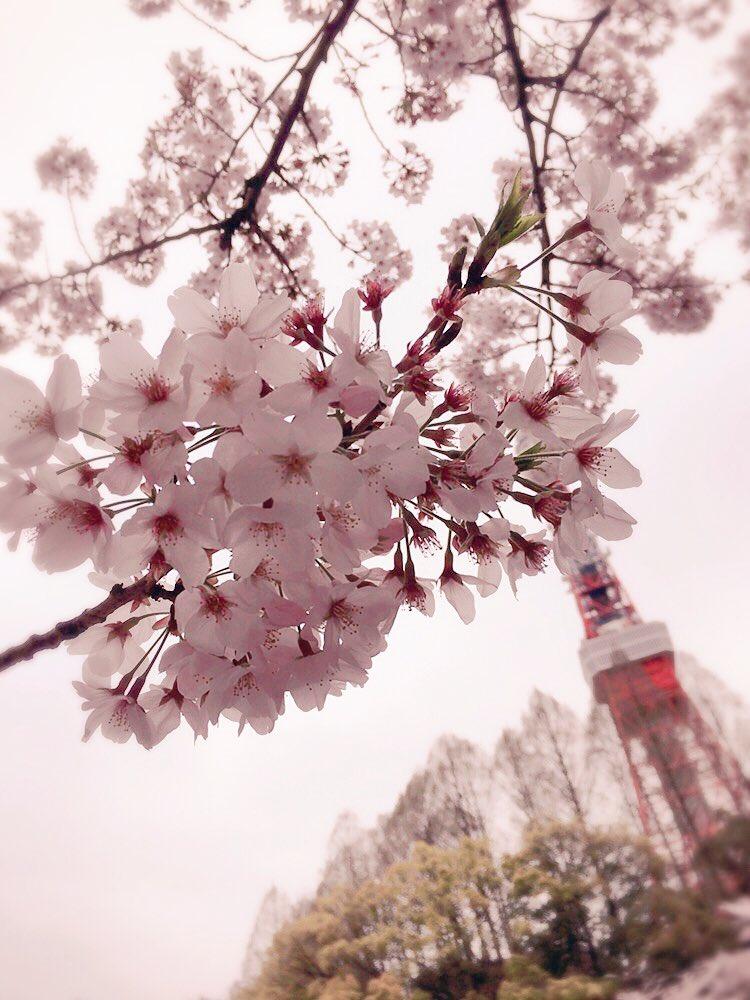 199回は、芝公園で録音したよっ!(*´v`*)by西 #洲崎西